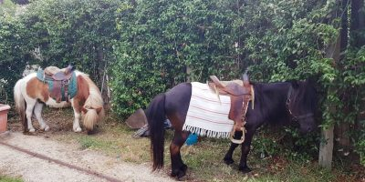 noleggio-pony-a-roma